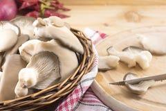Groupe de champignons de couche d'huître images libres de droits