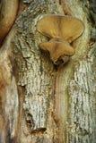 Groupe de champignons de couche s'élevant sur un joncteur réseau d'arbre Images libres de droits
