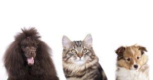 Groupe de chat et de chien Images libres de droits