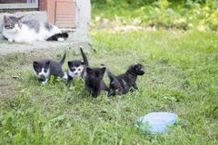 Groupe de chatons image libre de droits