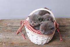 Groupe de chatons dans un panier Photographie stock