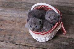 Groupe de chatons dans un panier Images libres de droits