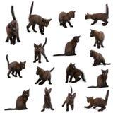 Groupe de chatons noirs Images libres de droits