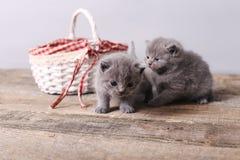 Groupe de chatons près du panier Image stock