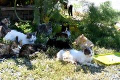 Groupe de chats égarés Photos libres de droits