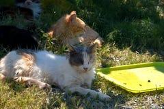 Groupe de chats égarés Photos stock