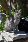 Groupe de chats égarés Image libre de droits
