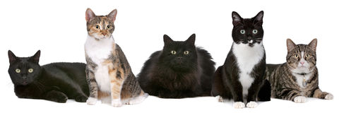 Groupe de chats Photo libre de droits