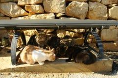 Groupe de chats mangeant des aliments pour chats secs Photographie stock libre de droits
