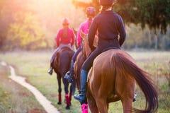 Groupe de cheval d'équitation d'adolescentes en parc d'automne Photo stock