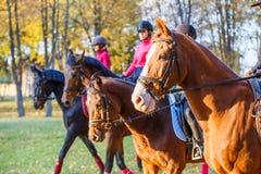 Groupe de cheval d'équitation d'adolescentes en parc d'automne Photographie stock libre de droits