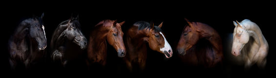 Groupe de chevaux Photo stock