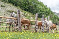 Groupe de chevaux Photo libre de droits