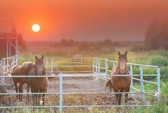 Groupe de chevaux bruns à une ferme pendant le coucher du soleil rouge gentil Image stock