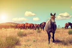 Groupe de chevaux frôlant dans le domaine Photographie stock libre de droits