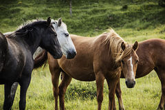 Groupe de chevaux sur le pâturage en automne Photo stock