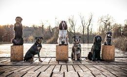 Groupe de chien reposant ensemble l'ourdoor Images stock