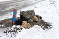 Groupe de chiens égarés Images libres de droits