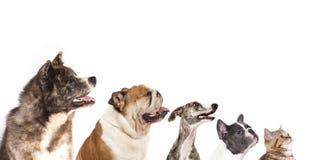 Groupe de chiens Photo libre de droits