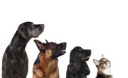 Groupe de chiens Photos libres de droits