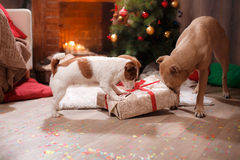 Groupe de chiens de race, société des chiens en vacances Photo stock