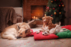 Groupe de chiens de race, société des chiens en vacances Photographie stock