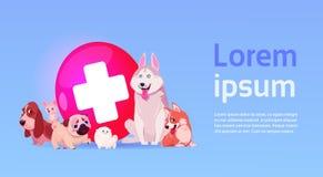 Groupe de chiens heureux au-dessus de concept de médecine vétérinaire d'icône de clinique de vétérinaire Photo stock