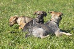 Groupe de chiens mignons Image stock