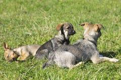 Groupe de chiens mignons Photographie stock