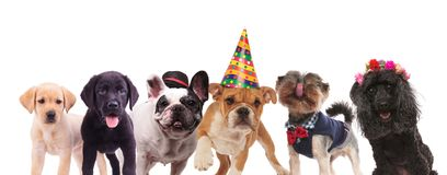 Groupe de chiens mignons se tenant ensemble Images stock