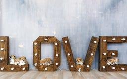 Groupe de chiots mignons dans la perspective de l'amour de mot Image stock