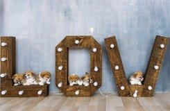 Groupe de chiots mignons dans le studio Image stock