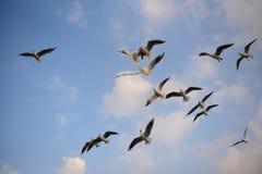 Groupe de ciel Photos libres de droits
