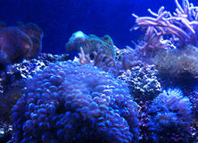 Groupe de corail Image stock