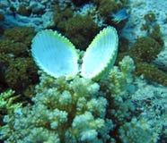 Groupe de corail et de seashell dans l'eau bleue. image libre de droits