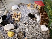 Groupe de couleurs de variété de lapins empilé photographie stock