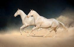 Groupe de course de cheval photographie stock libre de droits