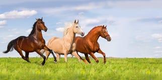 Groupe de course de cheval photographie stock