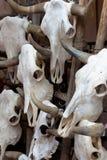 Groupe de crânes de taureau comme fond Photo libre de droits