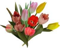 Groupe de dix fleurs de tulipe d'isolement sur le blanc Photo stock