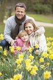 Groupe de famille dans les jonquilles Photographie stock libre de droits