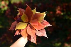Groupe de feuilles d'arbre en automne Photo stock