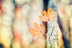 Groupe de feuilles dans l'automne tôt Photo stock