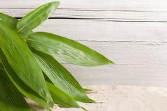 Groupe de feuilles ornementales fraîches de bambou Photo stock