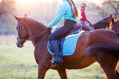 Groupe de filles de cavalier montant leurs chevaux en parc Photographie stock libre de droits