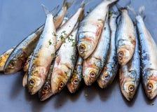 Groupe de fin horizontale de poissons de sardine vers le haut d'image Photos libres de droits