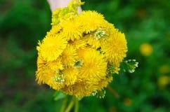 Groupe de fixation de main de fleurs jaunes lumineuses Photographie stock