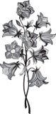 Groupe de fleur de cloche Image stock