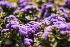 Groupe de fleurs Photo libre de droits