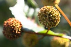 Groupe de fleurs anonymes d'un buisson sauvage. Photo stock